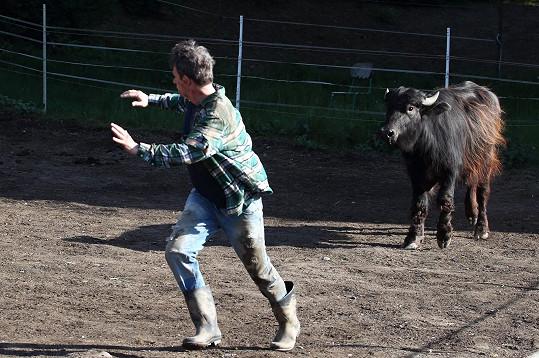 Herec před zvířetem zběsile utíkal i přesto, že ho nehonilo.