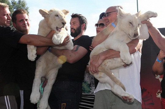 Noid byl kmotrem jednoho ze lvů.