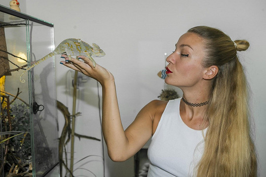 V bytečku mají i chameleona Pepíčka.