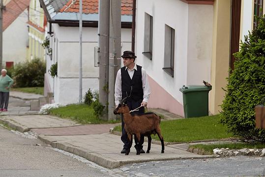Nejprve měl Miroslav Táborský k dispozici rohatou kozu.