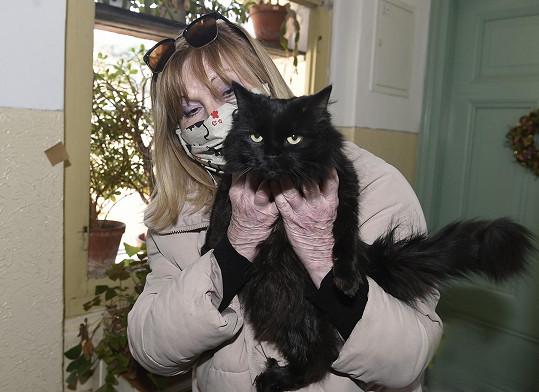 Kočky jsou její velká láska.