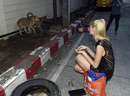 Na cestě z večeře se pokoušela blondýnka nakrmit opuštěné psy. Ti se jí ale bohužel báli.