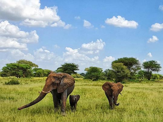 Potkali i slony.