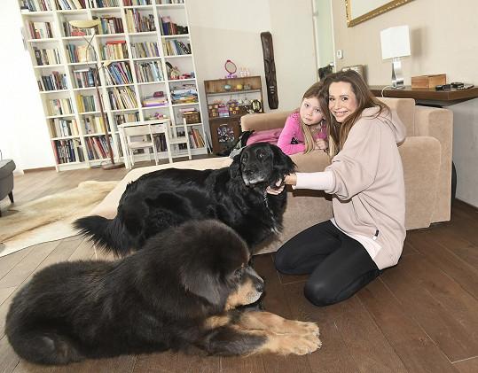 Dům je králostvím dvou velkých adoptovaných psů.