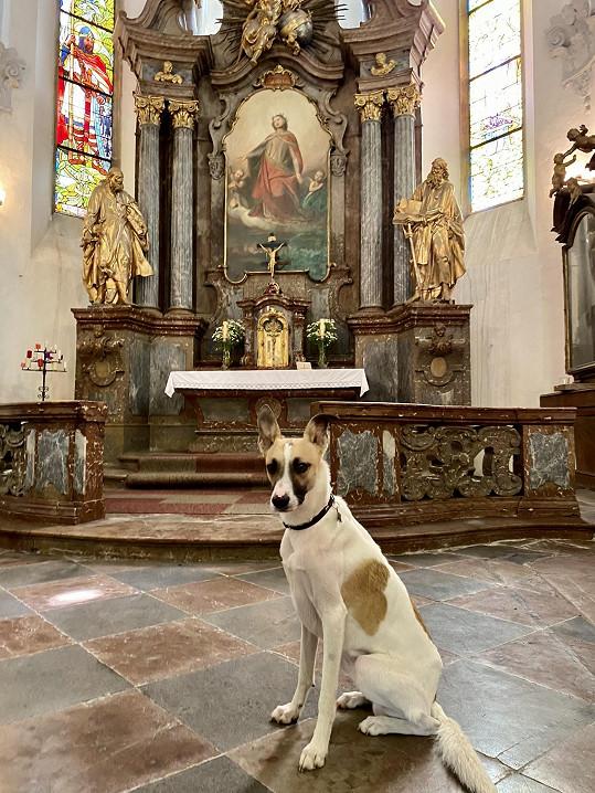 Fotografie na jeho sociálních sítích, kde je pes před oltářem, vzbudila obrovský rozruch.