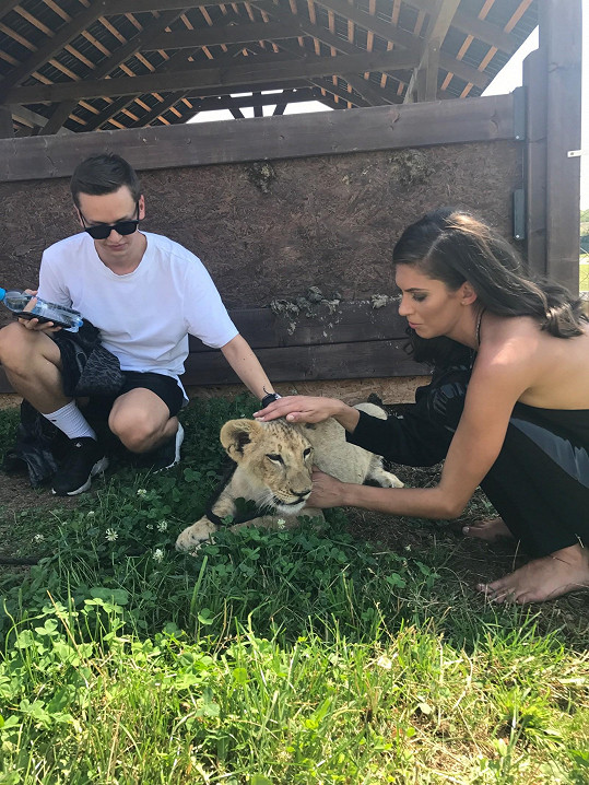 Malý lev a tygřík pózovali před objektivem jen chvíli a většinu času odpočívali ve stínu.