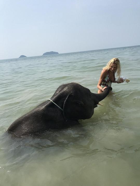 Mládě slona bylo velmi hravé.