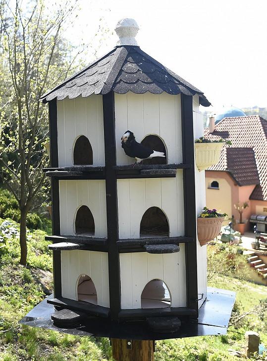 Osmany pro postavil barevně sladěný holubník.