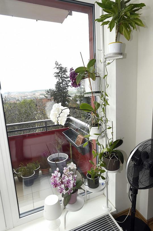 V prosluněném bytě se daří květinám.