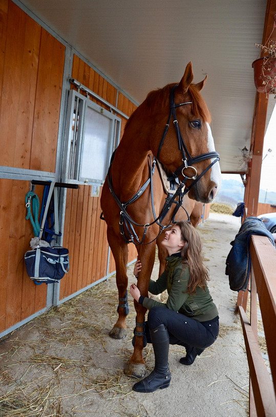 Koně má tedy dost velkého.