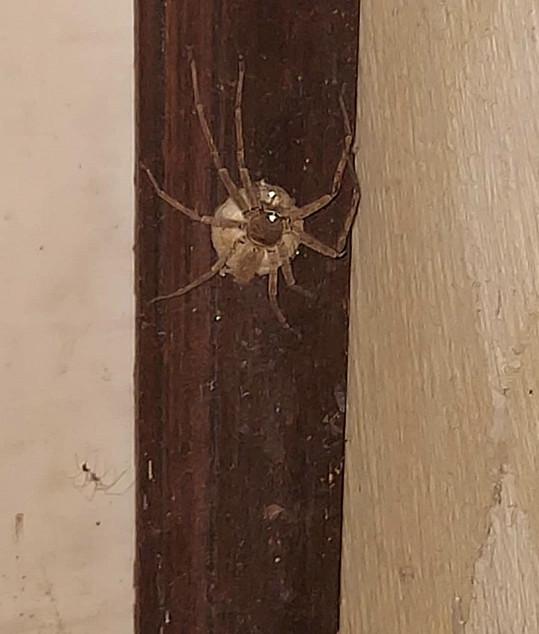 Tento pavouk Helenu Houdovou pokousal.