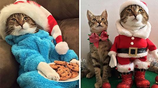 Kočičí vánoční pohoda...
