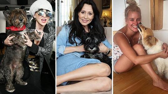 Kateřina Kaira Hrachovcová, Heidi Janků i Patricie Solaříková nedají na své psíky dopustit.