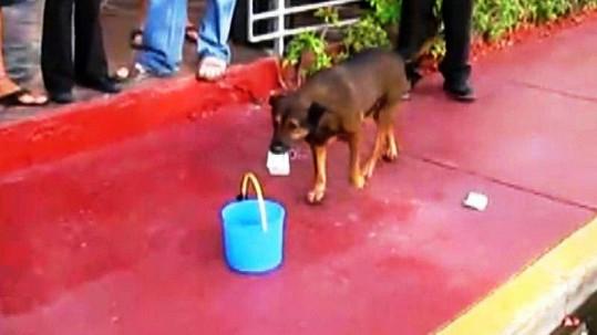 Pes obchází lidi s kbelíkem a sbírá do něj peníze