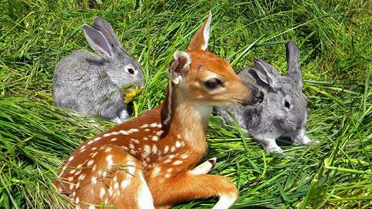 Bambi žije.