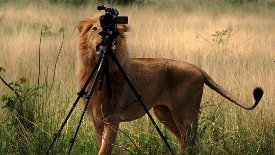Král zvířat se rozhodl zkusit si povolání fotografa.