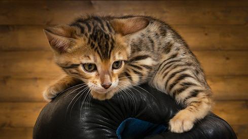 Eben kočička lízání galerií