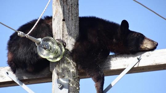 Medvěd na stožáru usnul.