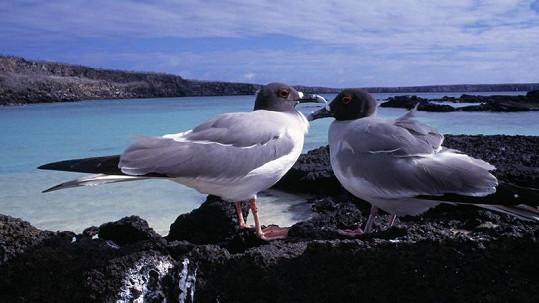 Galapágy jsou rájem na zemi. Angelina a Brad tam odjeli slavit zásnuby.