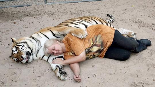 Přítulná tygří samice Saber
