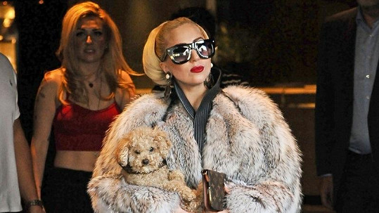 Lady Gaga v kožichu.