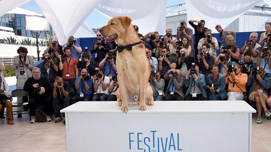 Tohle je skutečná hvězda filmového festivalu v Cannes.