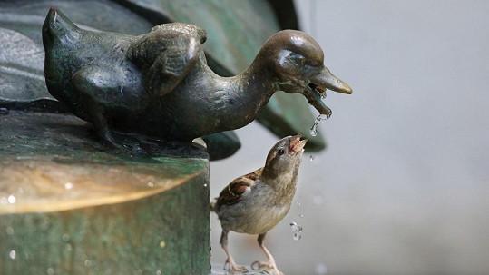 Tady ptákům chutná voda nejvíce.