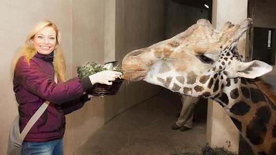 Borhyová při krmení žirafáka Vincka.