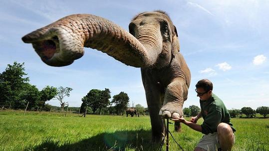 Slon si také zaslouží hezké nehty.