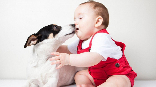Některý pes je kámoš. Jiný vás klidně srazí k zemi, ani si nevšimne. Ilustrační foto