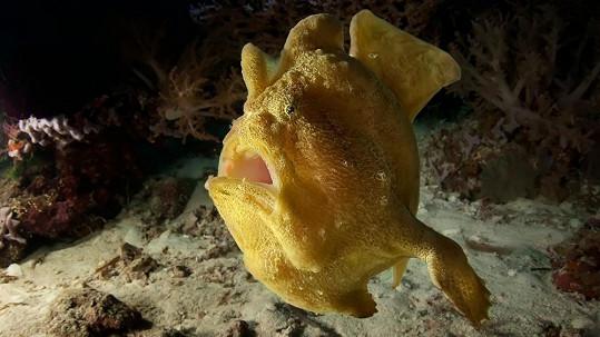 Moře ukrývá podivné živočichy.