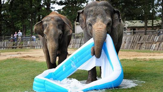Sloní mláďata vzala koupání po svém.