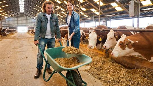 Tomáš Matonoha a Lucie Křížková pracovali v kravíně.