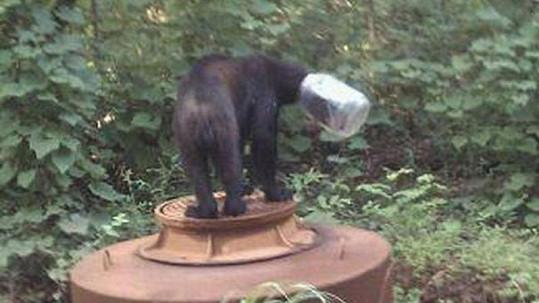 S plastovým soudkem na hlavě se huňáč nemohl tři týdny najíst.