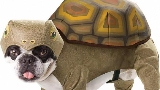 Kostým želvy.