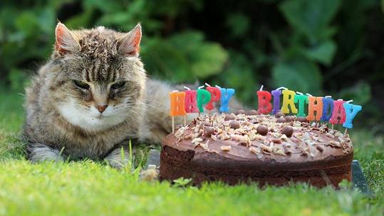 Pinky je nejstarší kočkou na světě.