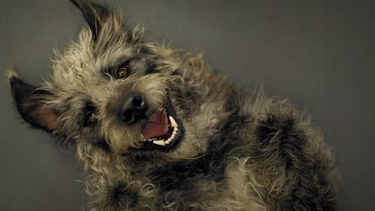 I psi mají důvod k radosti.