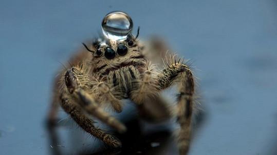 Pavouk s dovednostmi fotbalisty