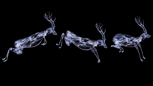 Rebecca Keers vytváří zvláštní fotografie zvířat.