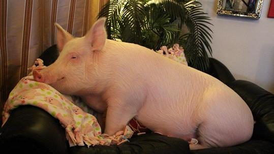 Esther si potrpí na pohodlí.