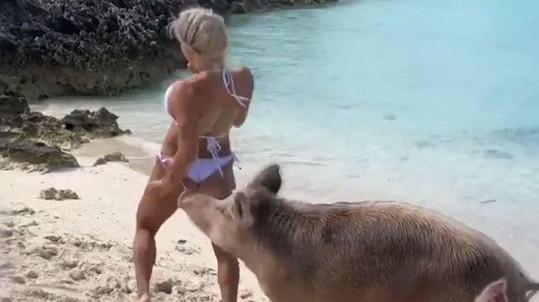 Michelle Lewin narazila na drzou svini.