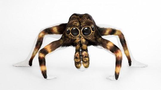 Tento pavouk není tím, čím se zdá být.