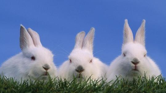 Německá důchodkyně krmila své králíky marihuanou.