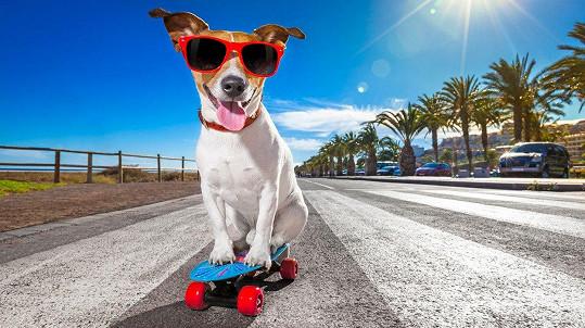I psy to táhne na skateboard. (ilustrační foto)