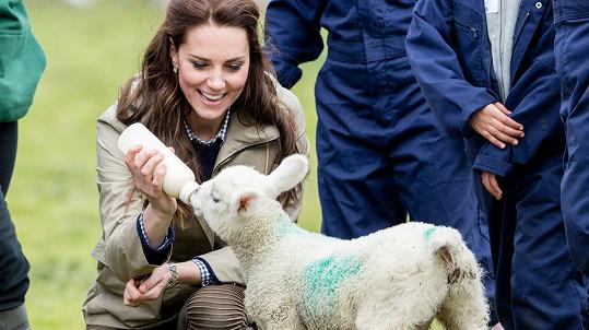 Vévodkyně Kate byla nadšená z návštěvy farmy.