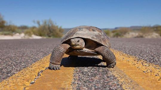 I želva to může pořádně rozjet. (ilustrační foto)