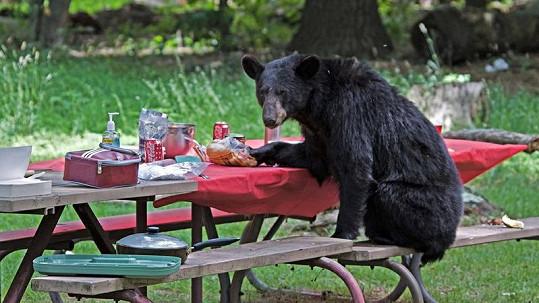 Medvěd kouká po turistech, jimž právě jí svačinu.