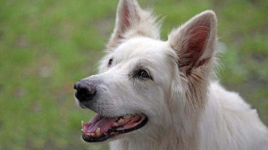 Pes chtěl být krásnější... (ilustrační foto)