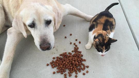 Pejsek a kočička se někdy nepohodnou. (ilustrační foto)