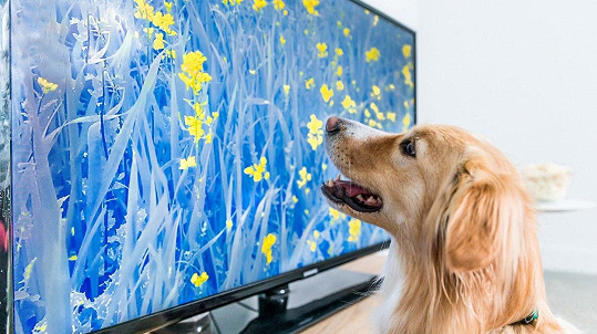 I psi rádi sledují televizi. (ilustrační foto)